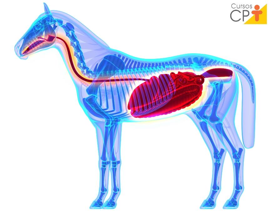 Necropsia em equinos? Faça a retirada dos órgãos corretamente   Artigos CPT