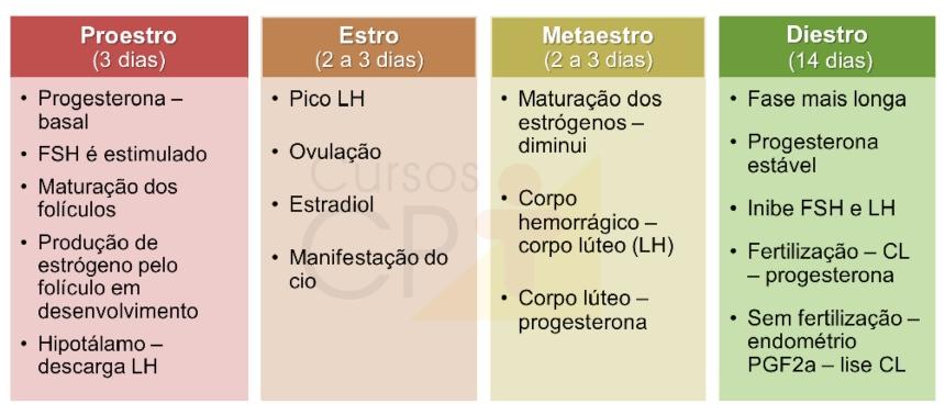 Características hormonais do ciclo estral de mamíferos    Artigos CPT