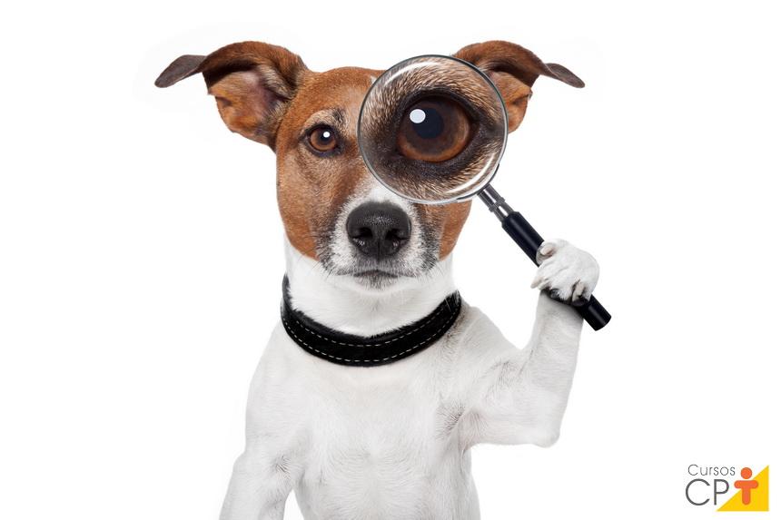Olhos dos animais domésticos: você sabe qual a função das pálpebras?