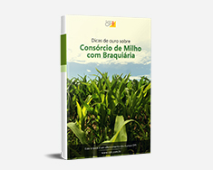 E-book Dicas de Ouro Sobre Consórcio de Milho com Braquiária