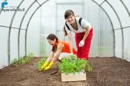 De quais dicas eu preciso para cultivar tomate orgânico?