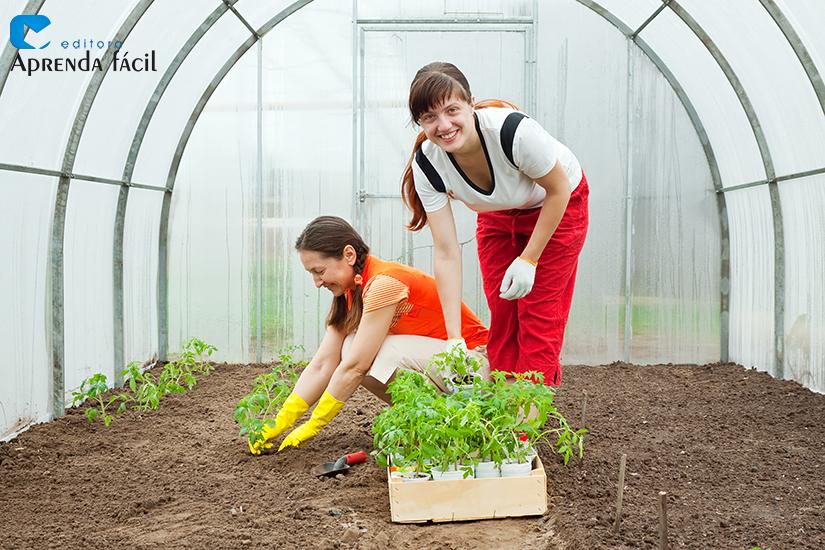 Cultivo orgânico tomateiro - imagem ilustrativa