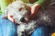 O que é e como tratar a parvovirose canina?
