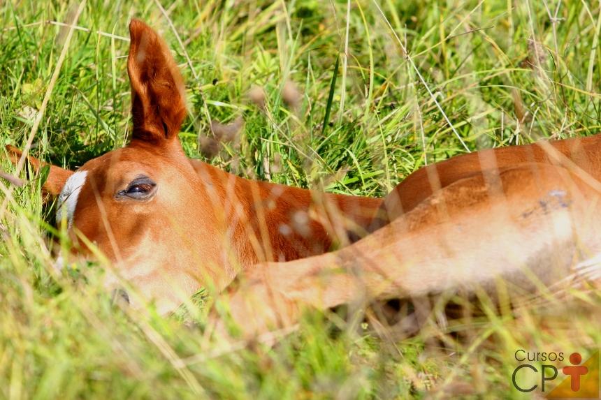 Encefalomielite em cavalos: sinais clínicos   Artigos CPT