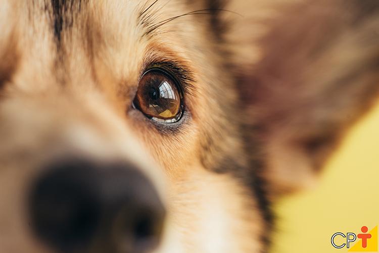 Olho de cão - imagem ilustrativa