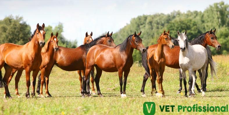 Equinos com carrapatos: como fazer o controle