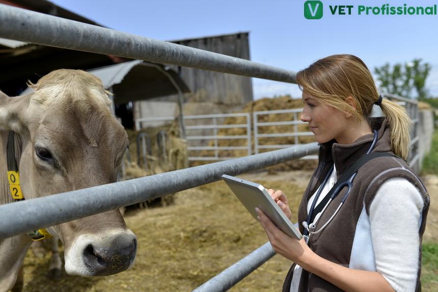 Exame clínico em bovinos: como coletar informações para o diagnóstico?