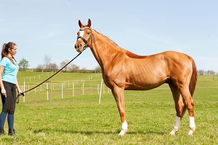 Cavalo - imagem ilustrativa