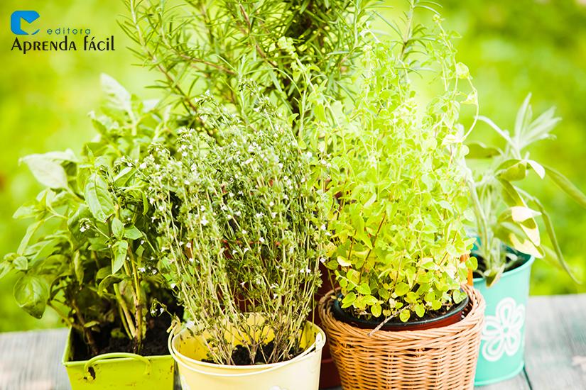 Plantas medicinais - imagem ilustrativa