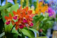 Gosta de orquídeas? Aprenda agora a plantar essas flores incríveis
