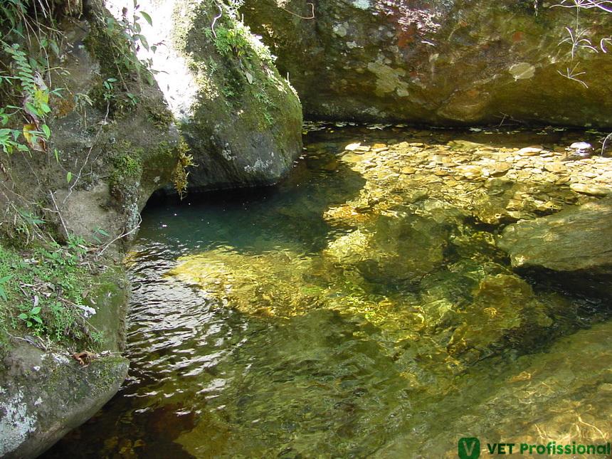 Médico Veterinário: você sabe o seu papel na preservação da água da propriedade rural?