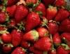 Morango, a fruta da estação, é notícia no CPT
