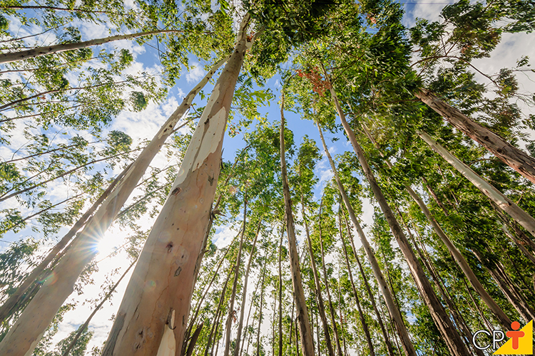 Floresta - imagem ilustrativa
