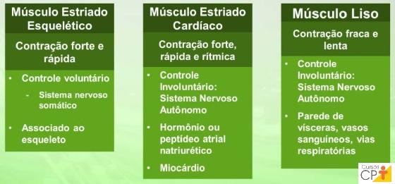 Características funcionais dos tipos de músculos       Artigos CPT