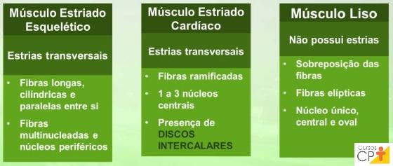 Características histológicas dos tipos de músculos      Artigos CPT