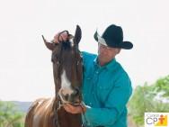 7 dicas para uma correta coleta de sêmen equino