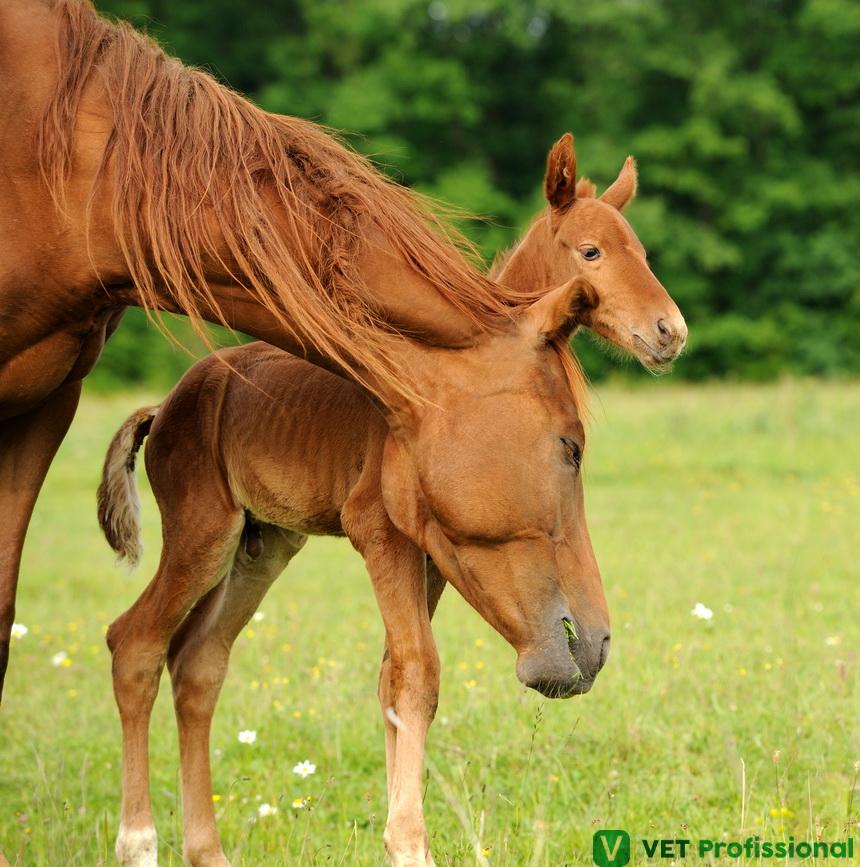 Homeostase em animais: você conhece esse mecanismo?