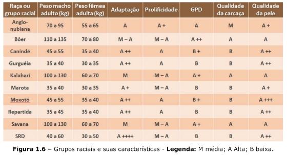 Grupos raciais e suas características indicados para o nordeste brasileiro