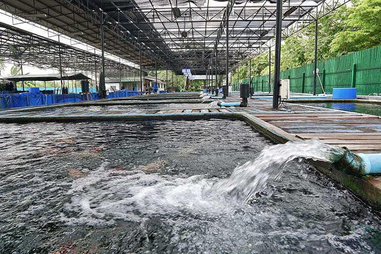 Água para a piscicultura - imagem ilustrativa