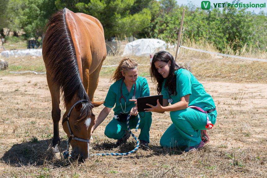 Tendinite crônica em equinos: quais são os exames específicos para esse diagnóstico?