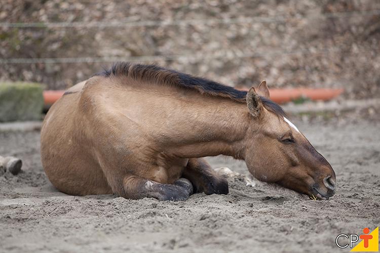 Cavalo doente - imagem ilustrativa