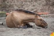 Conheça agora as principais doenças que atacam os equinos: baixe nosso novo e-book!