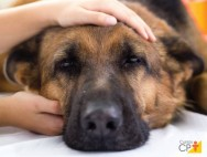 Quais as causas, os sintomas e o tratamento da pressão alta em cães?