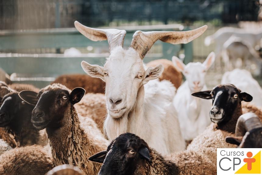 Vai criar cabras? Acerte em cheio na construção do curral de manejo!   Artigos CPT