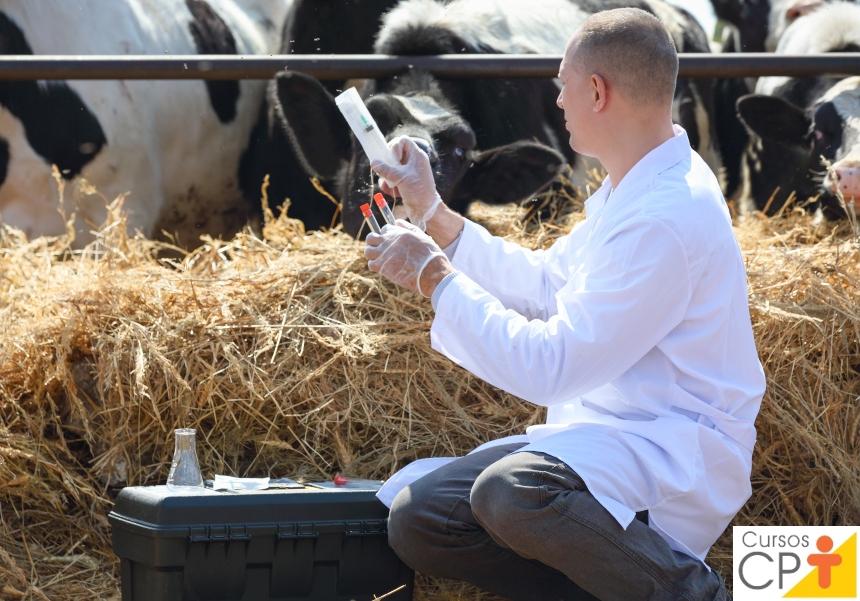 Vacinação do rebanho leiteiro: como implantar o calendário?   Dicas CPT