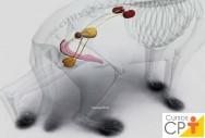 Sistema renal dos animais domésticos: quais são seus componentes?