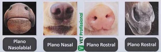 Classificação das narinas de acordo com os planos nasais.