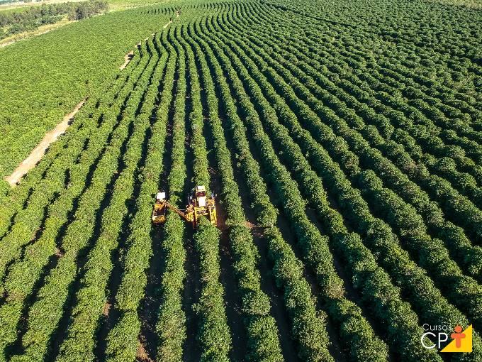 O que considerar para o espaçamento no plantio de café?