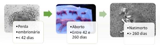 Foto: Perda embrionária, aborto e natimorto   Artigos CPT