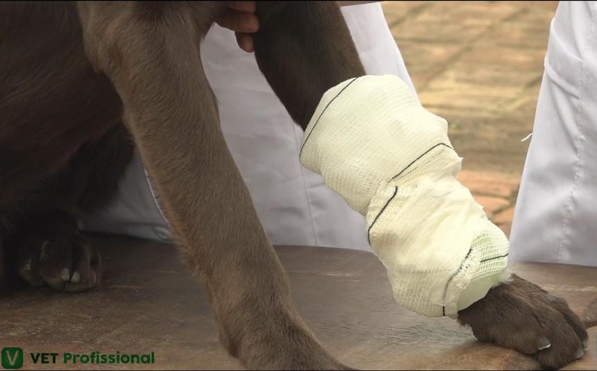 Crioterapia em animais: quais as indicações?