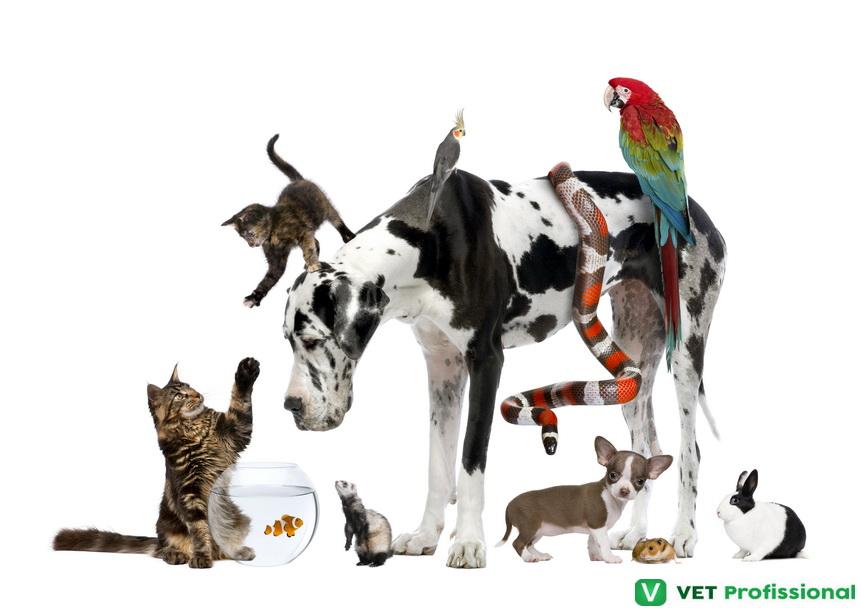 Sr. Veterinário, você está capacitado a atender pets exóticos?