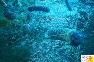 Salmonella e a Shigella. Por que essas bactérias são tão importantes?