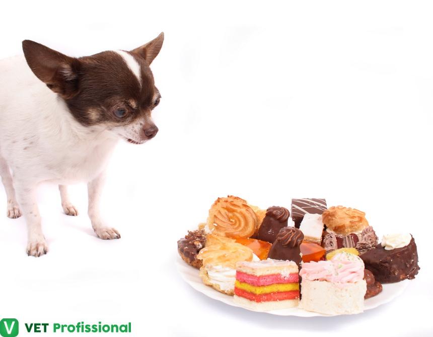 Indiscrição alimentar em cães: como diagnosticar?