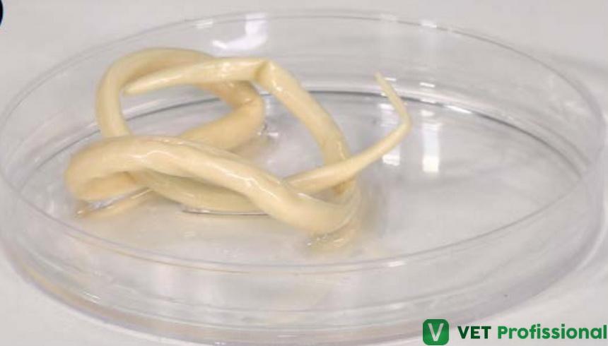 Parasitologia veterinária: como os parasitas se disseminam?