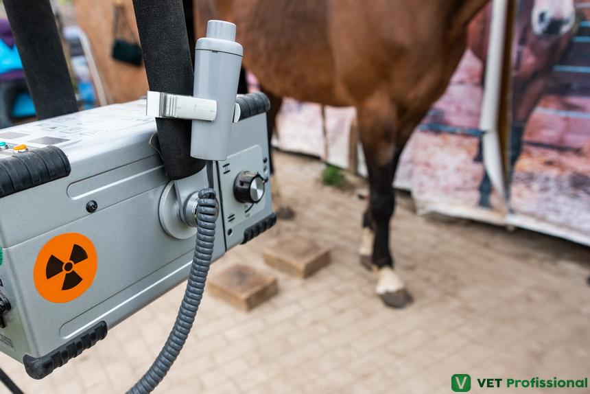 Exame radiológico do sistema locomotor de equinos: conheça alguns posicionamentos para obtenção das imagens