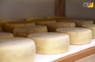 Sabe fazer queijos de qualidade? Monte uma fábrica!