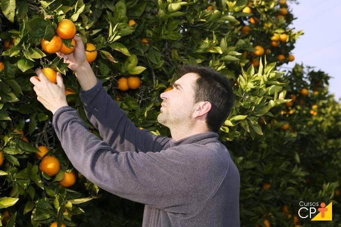 Quer plantar e cultivar laranja? Confira dicas imperdíveis!