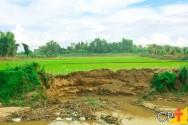 Impactos ambientais na lavoura: como reduzi-los?