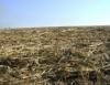Palha de cana-de-açúcar reduz em 20% as emissões de gás carbônico