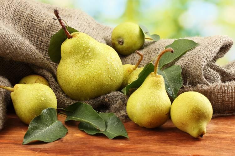 Quer saber como plantar pera? Confira as dicas!