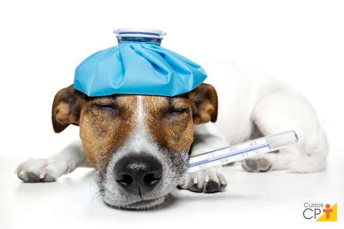 Tudo o que você precisa saber sobre parvovirose canina