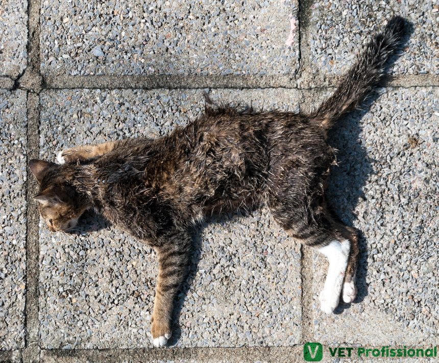 Quando e como fazer a necropsia em animais?