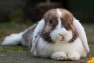 O que preciso saber para ter sucesso na criação de coelhos?