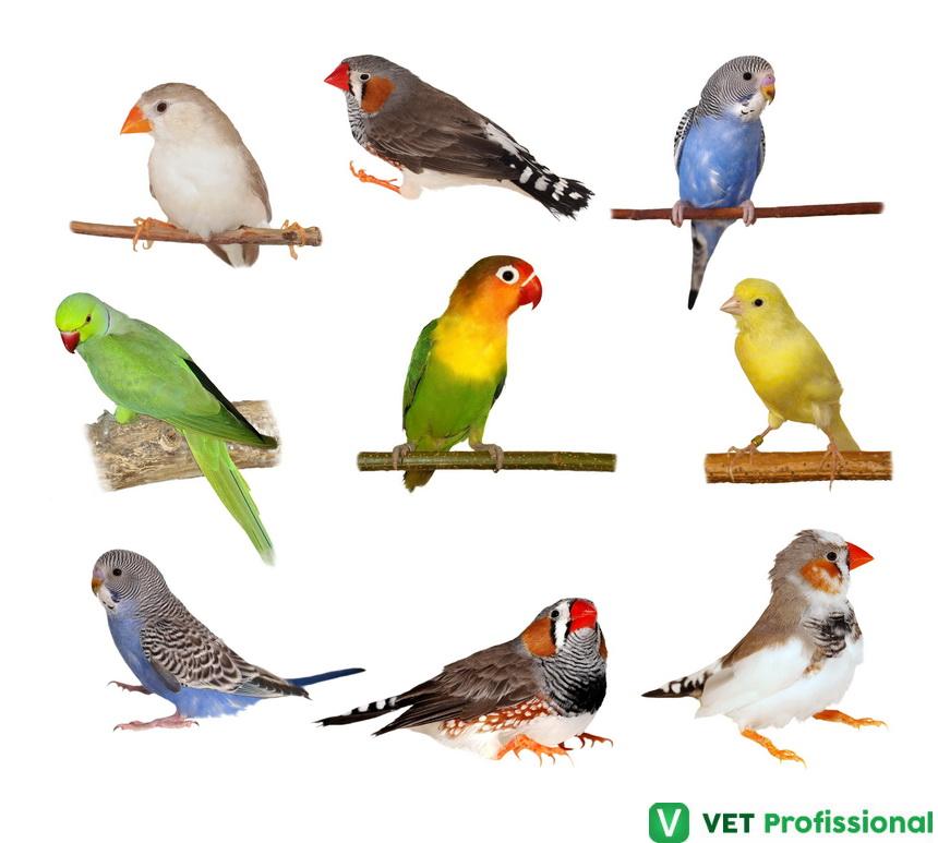 Corte das asas de aves de estimação: como realizar esse procedimento?