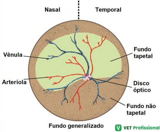 Imagem de um fundo ocular normal