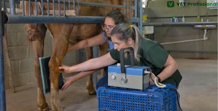 Alterações radiográficas associadas à claudicação e a patologias no tarso dos equinos